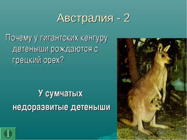 Австралия - 2 Почему у гигантских кенгуру детеныши рождаются с грецкий орех?...