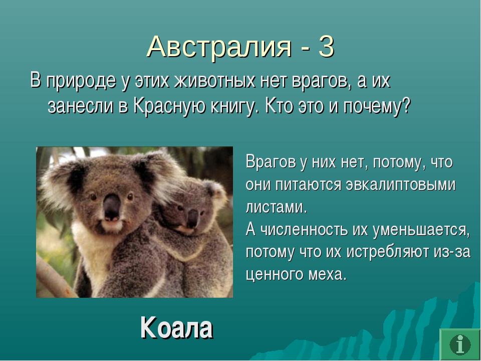 Австралия - 3 В природе у этих животных нет врагов, а их занесли в Красную кн...