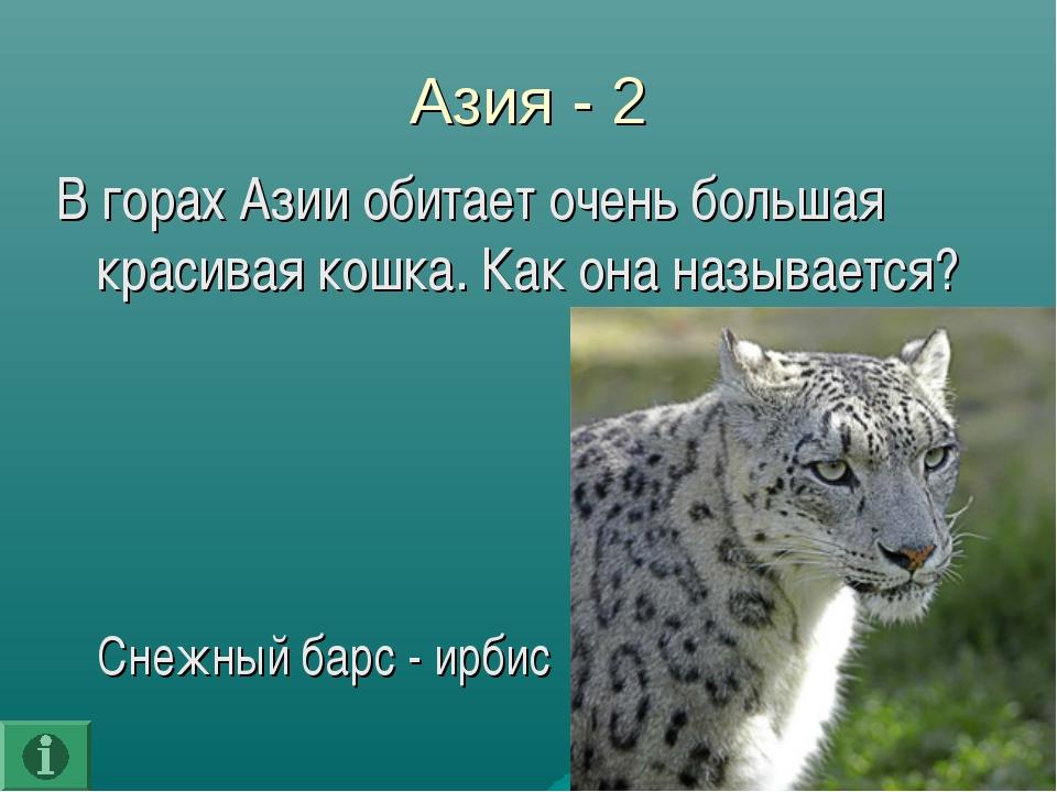 Азия - 2 В горах Азии обитает очень большая красивая кошка. Как она называетс...