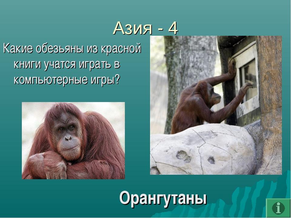 Азия - 4 Какие обезьяны из красной книги учатся играть в компьютерные игры? О...