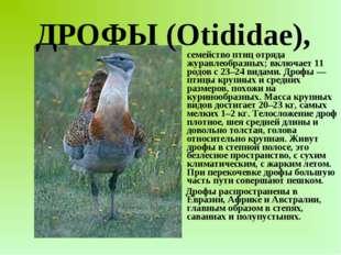 семейство птиц отряда журавлеобразных; включает 11 родов с 23–24 видами. Дро