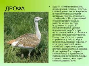 Будучи наземными птицами, дрофы имеют сильные, толстые, средней длины ноги с