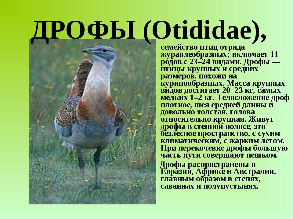 семейство птиц отряда журавлеобразных; включает 11 родов с 23–24 видами. Дро...