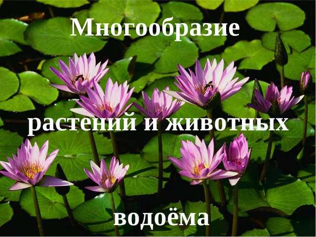 Многообразие растений и животных водоёма