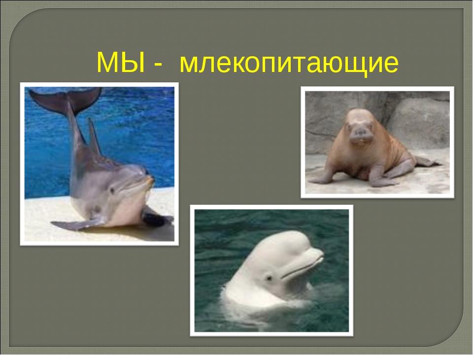 МЫ - млекопитающие