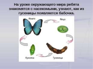 На уроке окружающего мира ребята знакомятся с насекомыми, узнают, как из гусе