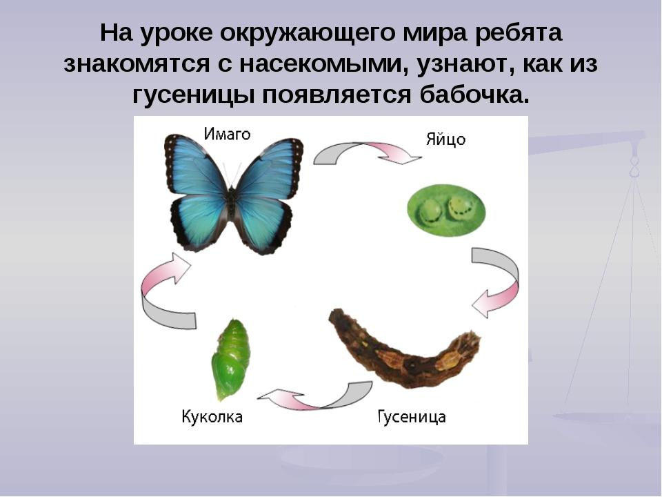 На уроке окружающего мира ребята знакомятся с насекомыми, узнают, как из гусе...
