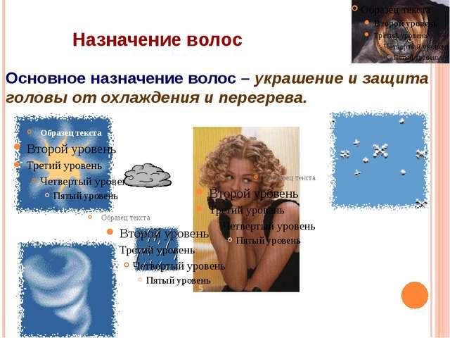 Назначение волос Основное назначение волос – украшение и защита головы от охл...