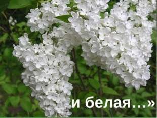 и белая…»