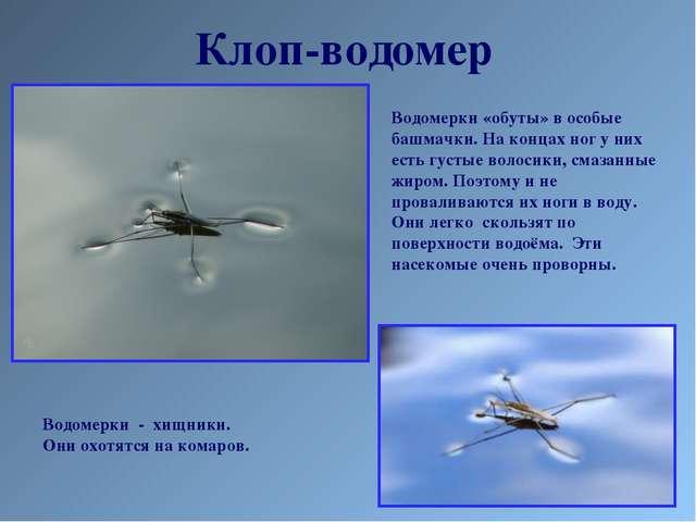 Клоп-водомер Водомерки «обуты» в особые башмачки. На концах ног у них есть гу...