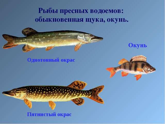 Рыбы пресных водоемов: обыкновенная щука, окунь.