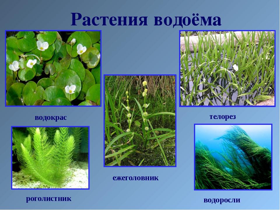 Растения водоёма