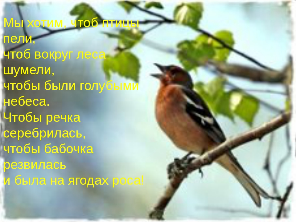 Мы хотим, чтоб птицы пели, чтоб вокруг леса шумели, чтобы были голубыми небеса, чтобы речка серебрилась