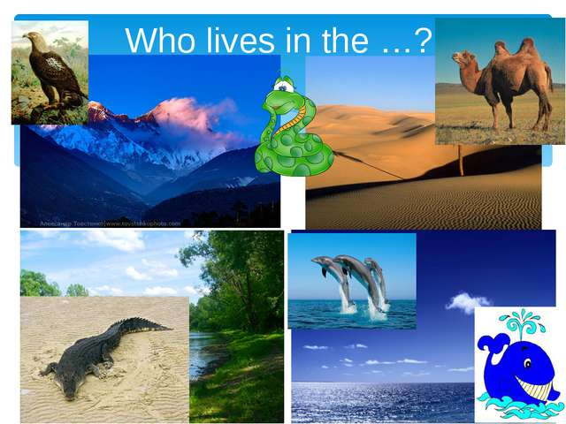 Who lives in the …?