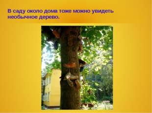 В саду около дома тоже можно увидеть необычное дерево.