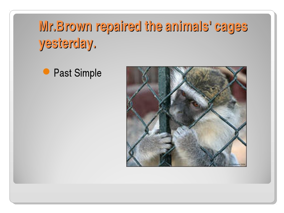 Mr.Brown repaired the animals' cages yesterday. Past Simple