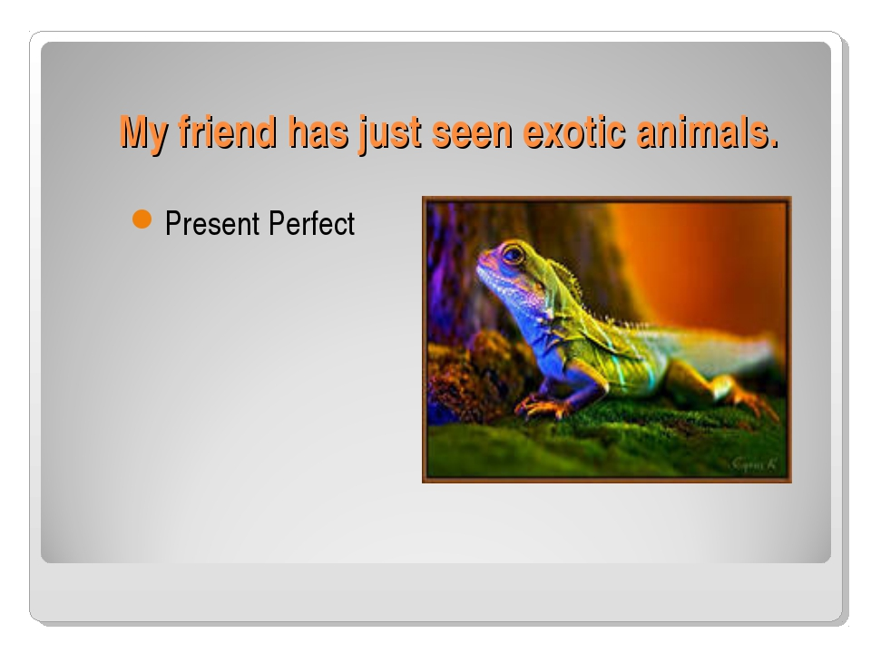 My friend has just seen exotic animals. Present Perfect
