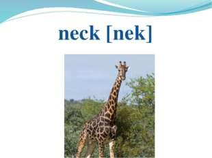 neck [nek]