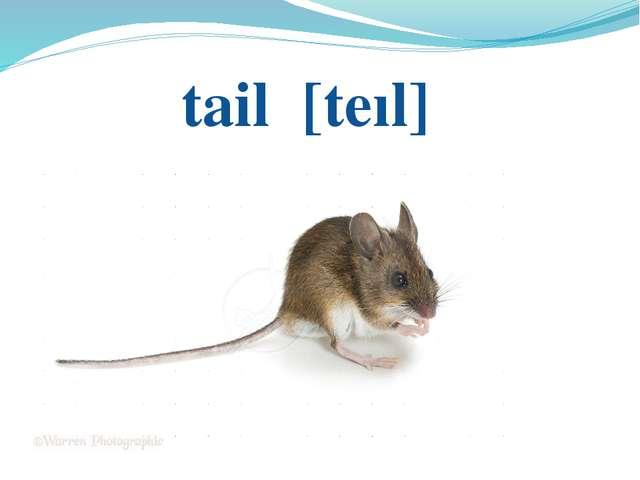 tail [tеıl]