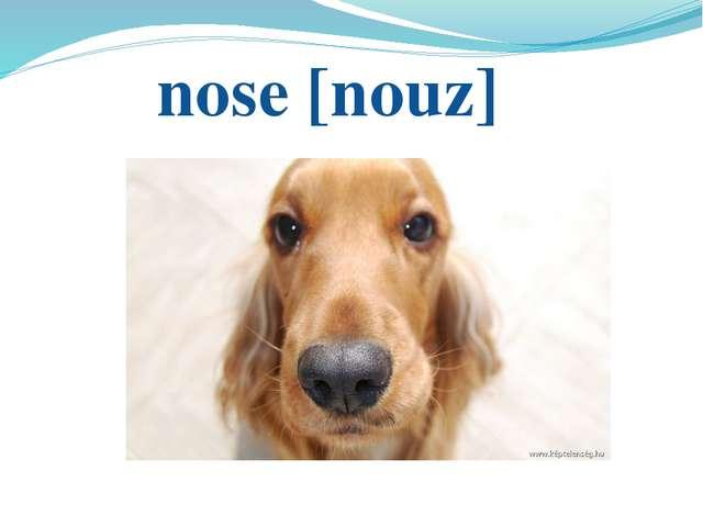 nose [nouz]