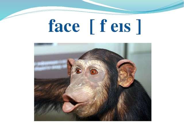 face [ f еıs ]