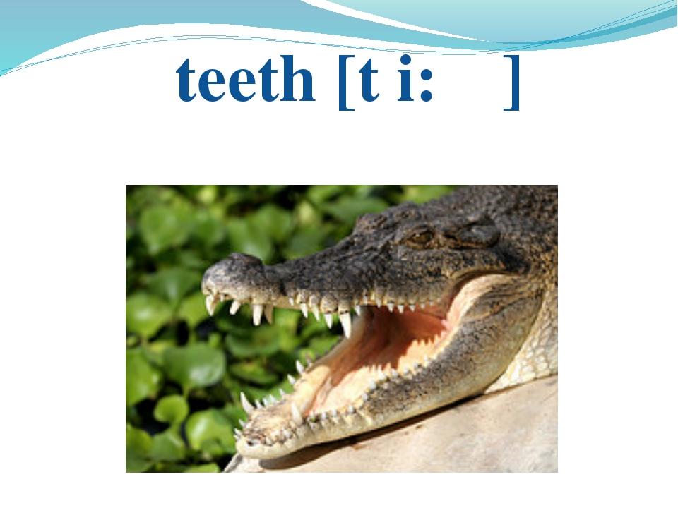 teeth [t i: ɵ]