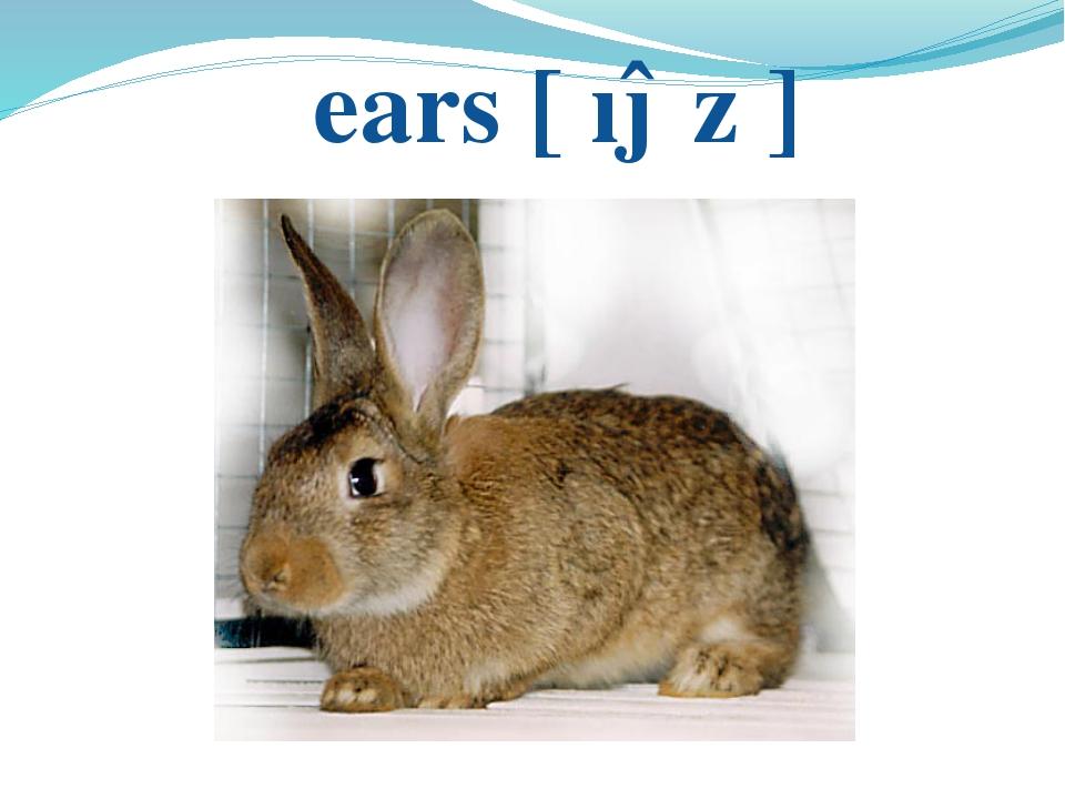 ears [ ıəz ]