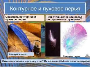 Контурное и пуховое перья Сравнить контурное и пуховое перья. Чем отличаются