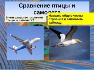 Сравнение птицы и самолета В чем сходство строения птицы и самолета? Назвать