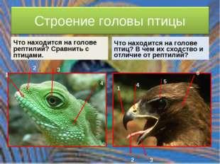 Что находится на голове рептилий? Сравнить с птицами. Что находится на голове