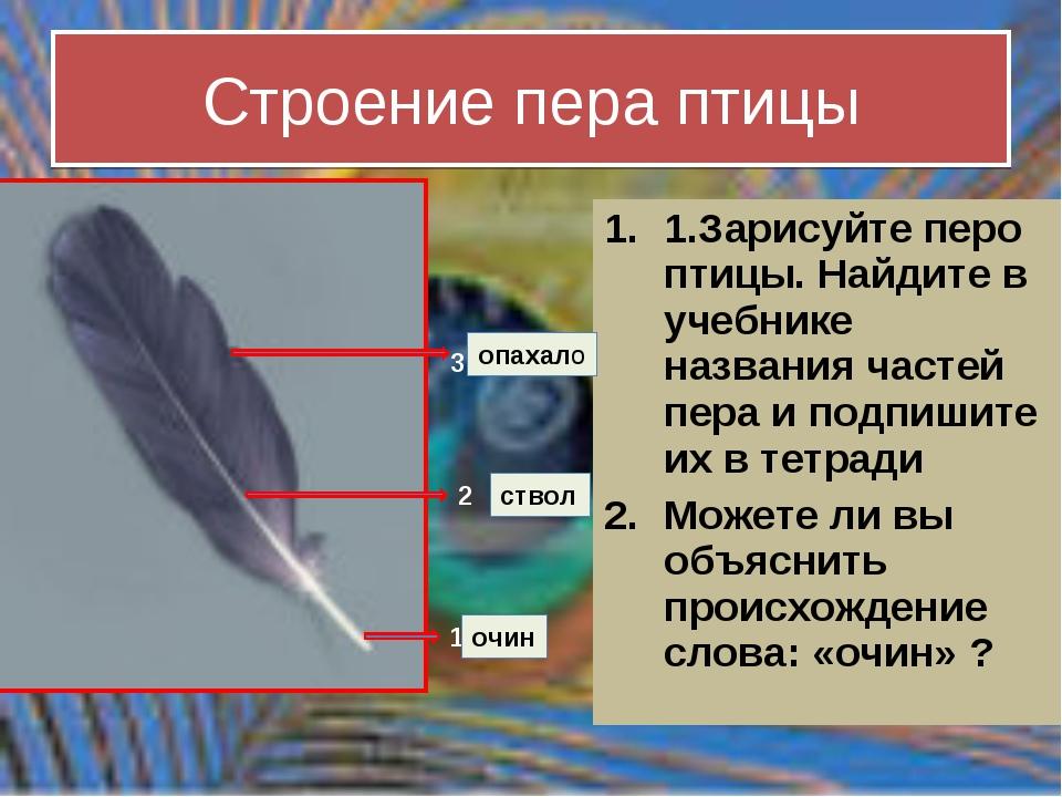 Строение пера птицы 1.Зарисуйте перо птицы. Найдите в учебнике названия часте...