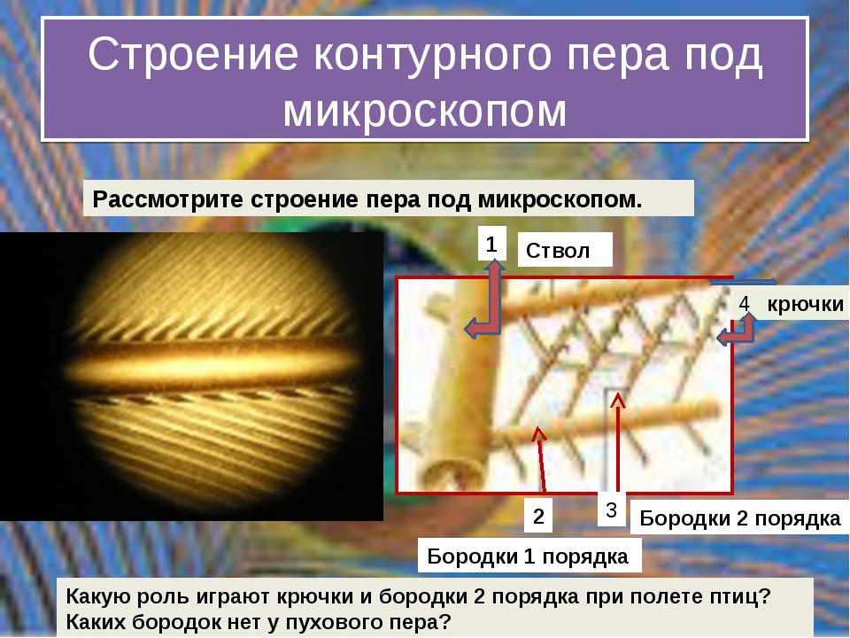 Строение контурного пера под микроскопом крючки 4 Какую роль играют крючки и...
