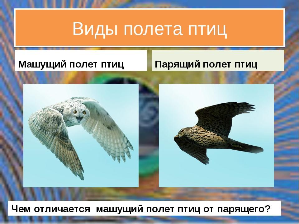 Виды полета птиц Машущий полет птиц Парящий полет птиц Чем отличается машущий...