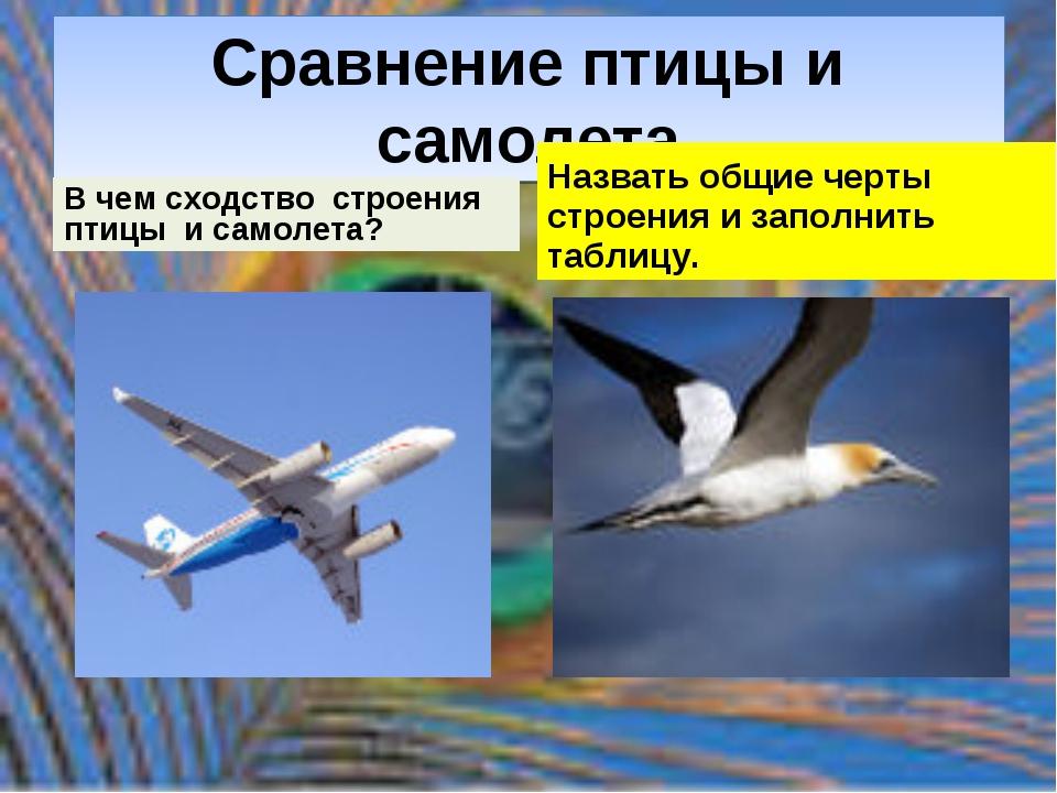 Сравнение птицы и самолета В чем сходство строения птицы и самолета? Назвать...