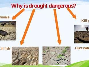 Why is drought dangerous? Kill animals Kill fish Kill people Hurt nature