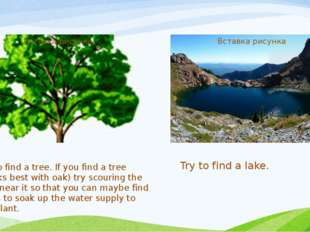 Try to find a tree. If you find a tree (works best with oak) try scouring the