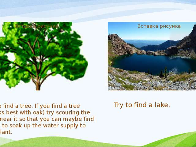 Try to find a tree. If you find a tree (works best with oak) try scouring the...