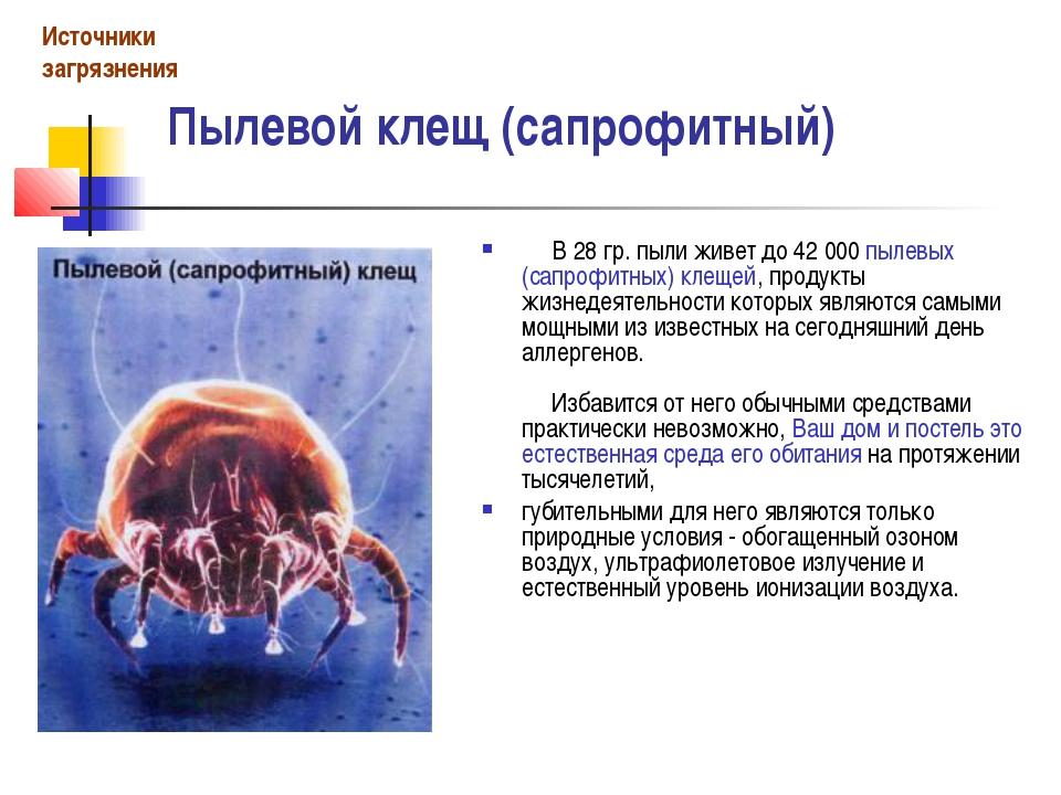 Пылевой клещ (сапрофитный) В 28 гр. пыли живет до 42 000 пылевых (сапроф...