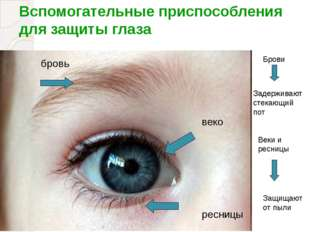Вспомогательные приспособления для защиты глаза бровь веко ресницы Брови Заде