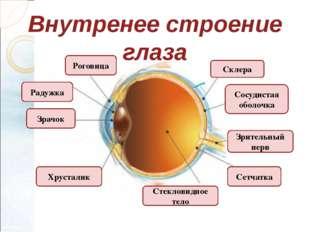 Внутренее строение глаза Сосудистая оболочка Роговица Склера Радужка Зрачок З