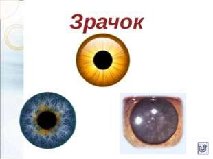 Оптическая система глаза Роговица (сильная собирающая линза, которая фокусиру