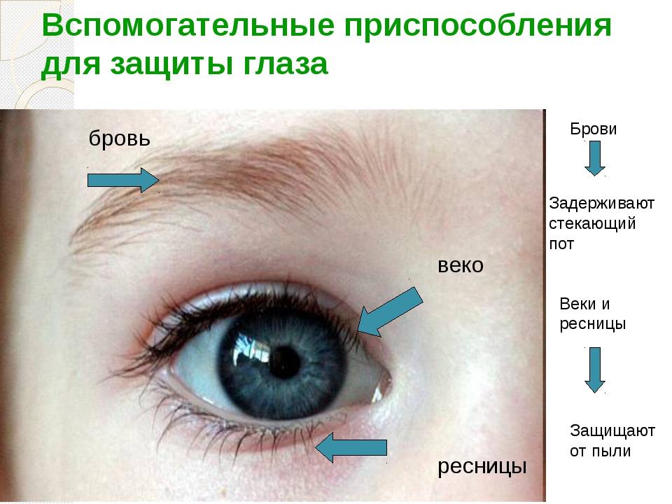 Вспомогательные приспособления для защиты глаза бровь веко ресницы Брови Заде...