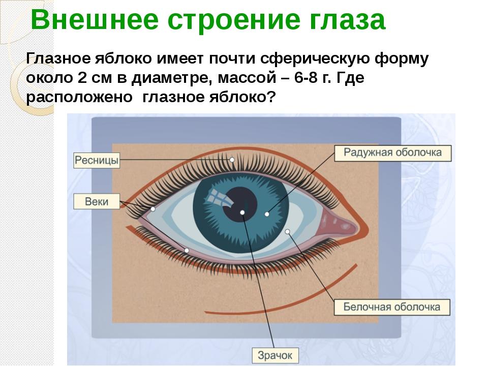 Внешнее строение глаза Глазное яблоко имеет почти сферическую форму около 2 с...