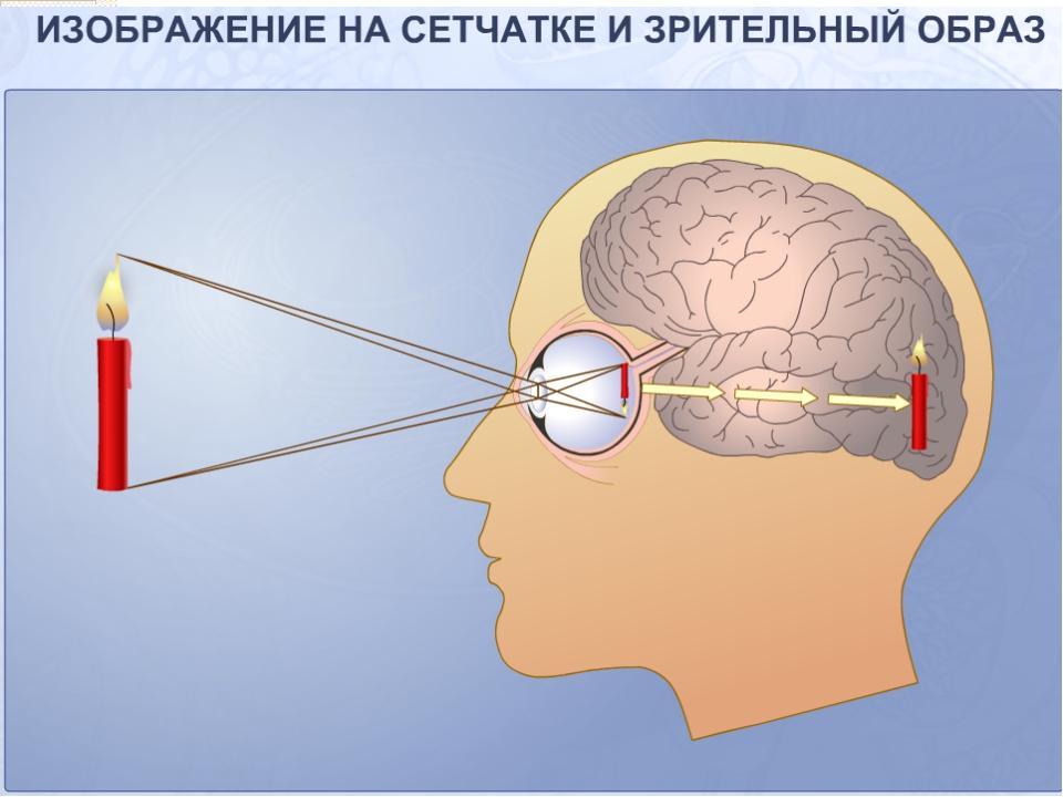 Что мы узнали о строении глаза. То «худеет», то «толстеет», То «привстанет»,...