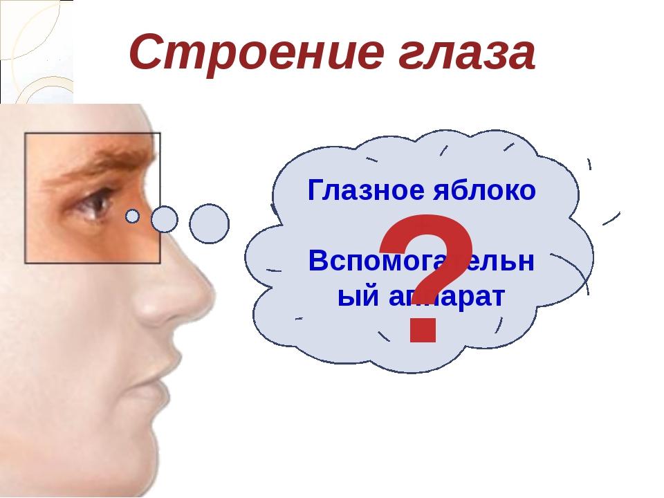 Глазное яблоко + Вспомогательный аппарат Строение глаза ?