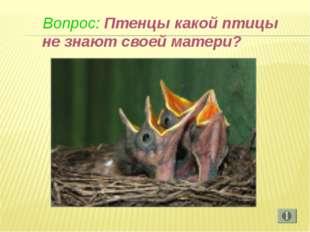 Вопрос: Птенцы какой птицы не знают своей матери?