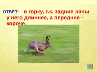 ОТВЕТ: в горку, т.к. задние лапы у него длиннее, а передние – короче.