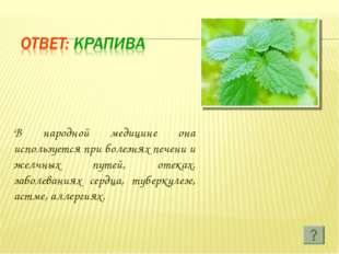 В народной медицине она используется при болезнях печени и желчных путей, оте