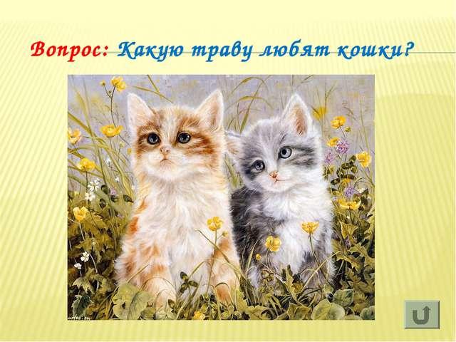 Вопрос: Какую траву любят кошки?