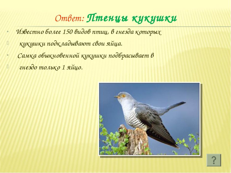 Ответ: Птенцы кукушки Известно более 150 видов птиц, в гнезда которых кукушки...